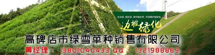 晋城种子带 《绿雪》 植被生态袋售价