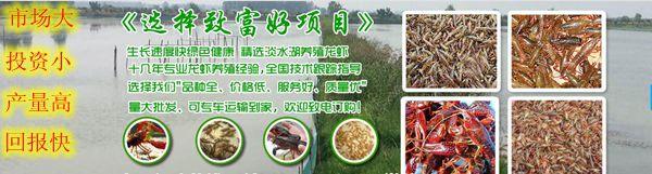 http://himg.china.cn/0/4_486_1050807_600_161.jpg