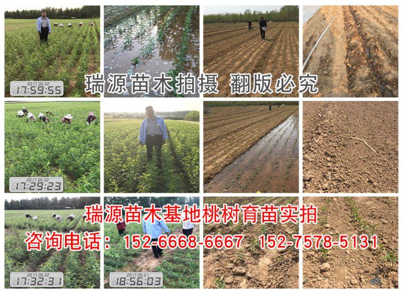 http://himg.china.cn/0/4_486_237242_800_584.jpg