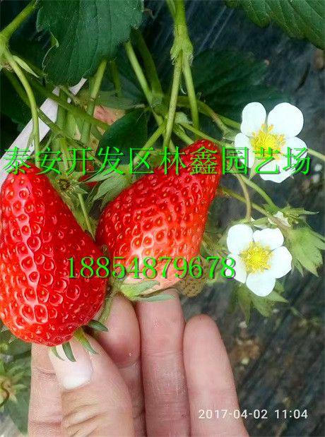 http://himg.china.cn/0/4_487_238054_460_619.jpg