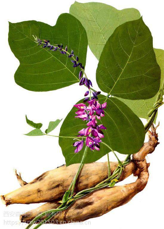森冉生物供应高品质葛根提取物10:1/葛藤提取物