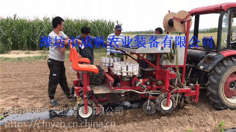 成帆农业蔬菜种植机 栽苗机