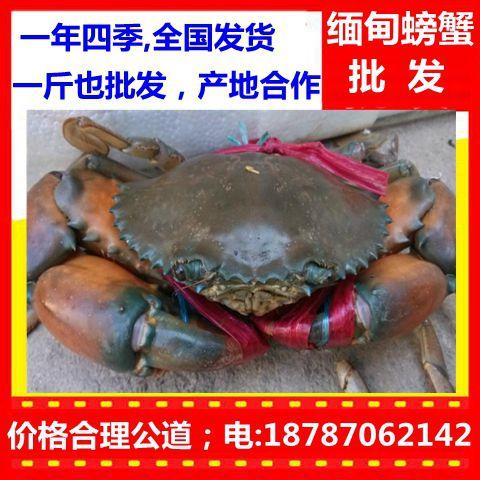 http://himg.china.cn/0/4_492_237408_480_480.jpg