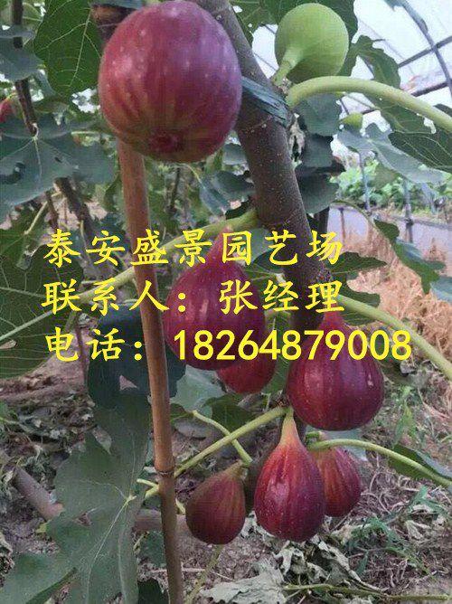 http://himg.china.cn/0/4_501_1036449_500_668.jpg