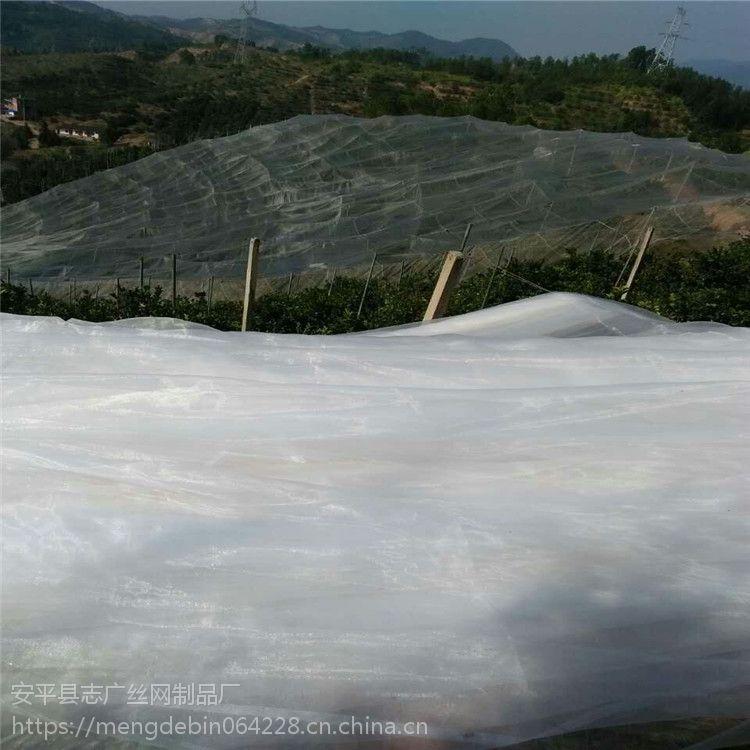 厂家定做全新料抗老化40目防虫网 蔬菜大棚防虫网 大片