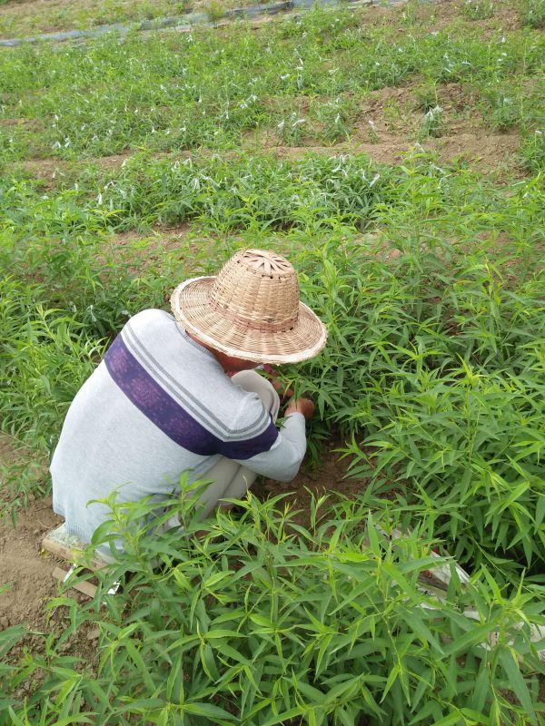 http://himg.china.cn/0/4_506_1088421_600_800.jpg