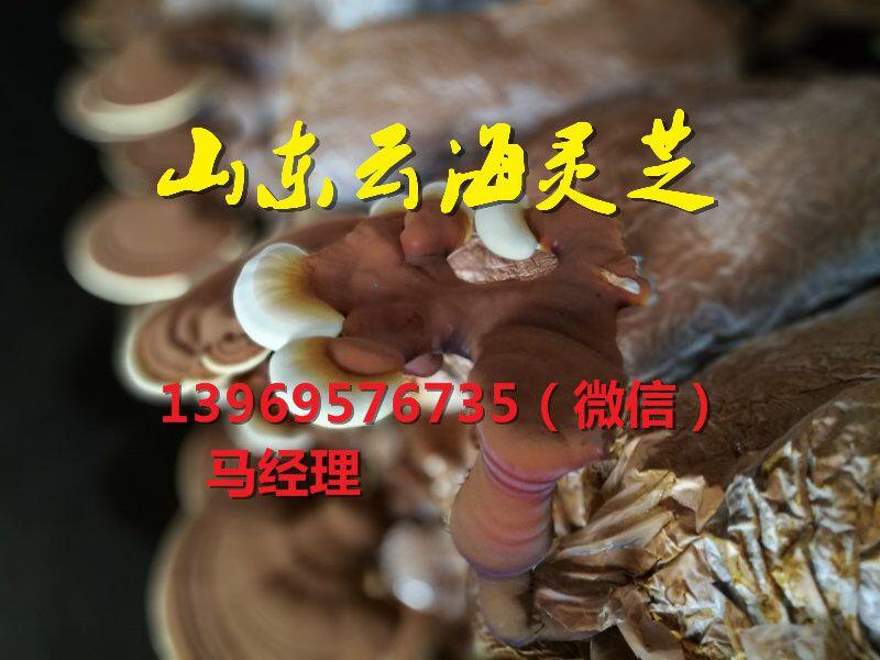 http://himg.china.cn/0/4_50_227646_800_600.jpg