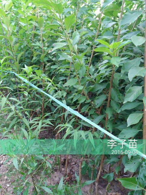 http://himg.china.cn/0/4_511_238002_480_640.jpg