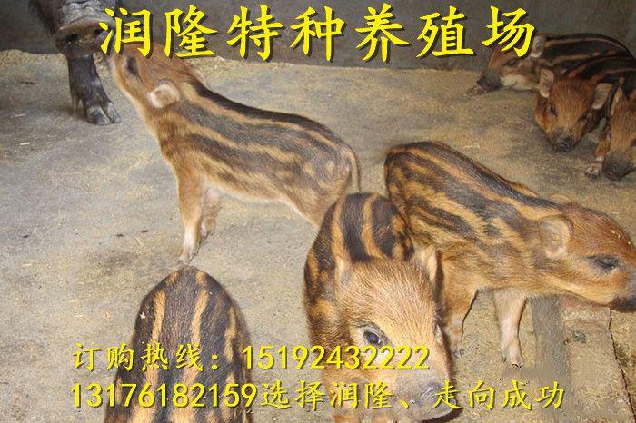 http://himg.china.cn/0/4_513_234716_700_466.jpg