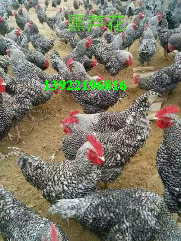 http://himg.china.cn/0/4_517_1020511_600_800.jpg