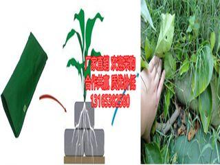 http://himg.china.cn/0/4_518_1008391_320_240.jpg