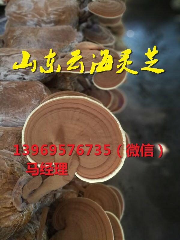 http://himg.china.cn/0/4_520_227770_600_800.jpg