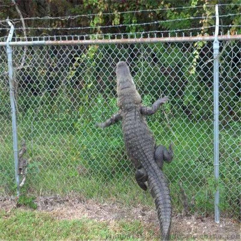 学校护栏 各种规格勾花网 篮球场护栏