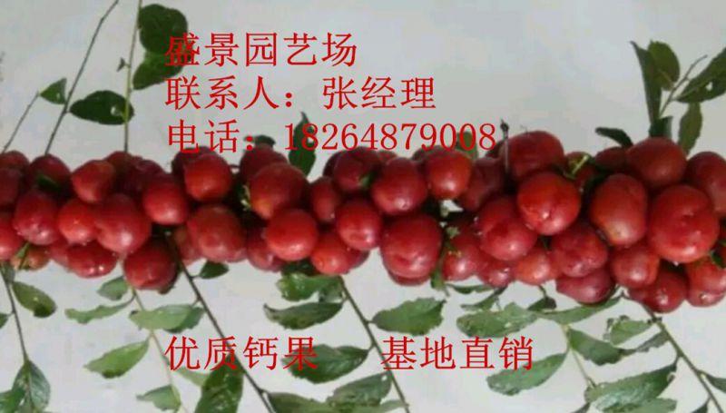 http://himg.china.cn/0/4_520_238558_800_455.jpg