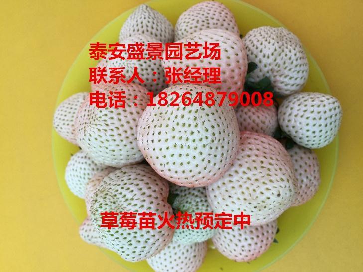 http://himg.china.cn/0/4_524_237380_729_548.jpg