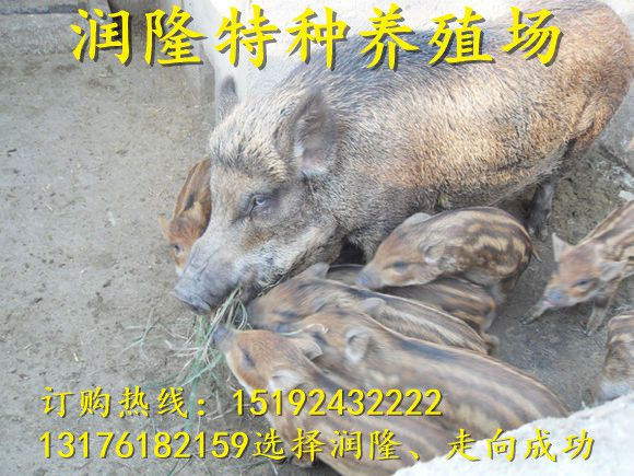 http://himg.china.cn/0/4_525_235606_580_435.jpg
