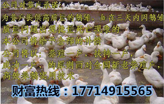 http://himg.china.cn/0/4_526_238770_539_341.jpg