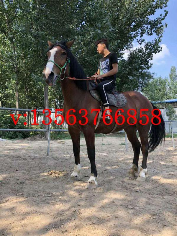 http://himg.china.cn/0/4_527_1036497_600_800.jpg