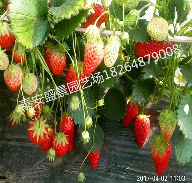 http://himg.china.cn/0/4_527_236052_626_598.jpg