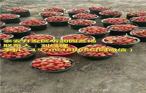 http://himg.china.cn/0/4_532_241746_500_320.jpg
