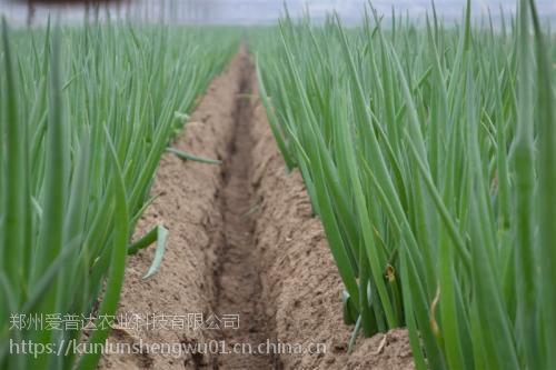 地下作物杀虫药肥一管到底,专杀地下害虫,一管到底厂家价格
