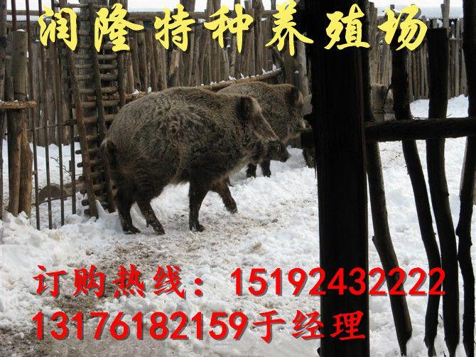 http://himg.china.cn/0/4_537_238312_670_502.jpg