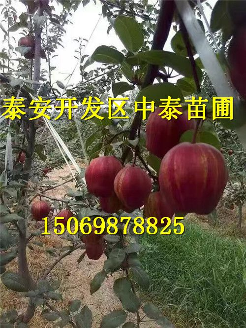 http://himg.china.cn/0/4_53_236522_500_665.jpg