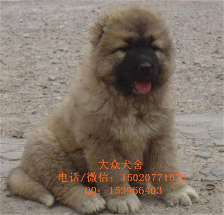 http://himg.china.cn/0/4_53_240470_750_722.jpg