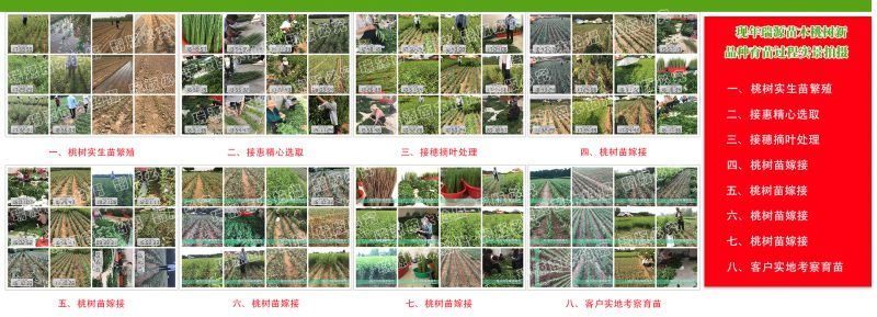 http://himg.china.cn/0/4_541_237262_800_289.jpg