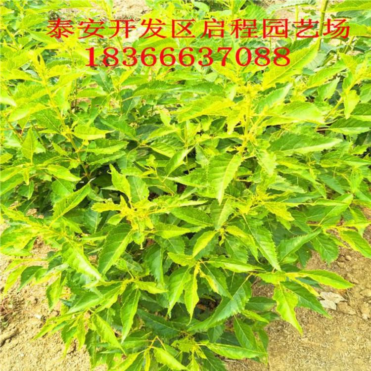 http://himg.china.cn/0/4_542_235574_750_750.jpg