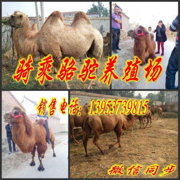 http://himg.china.cn/0/4_543_240956_597_597.jpg