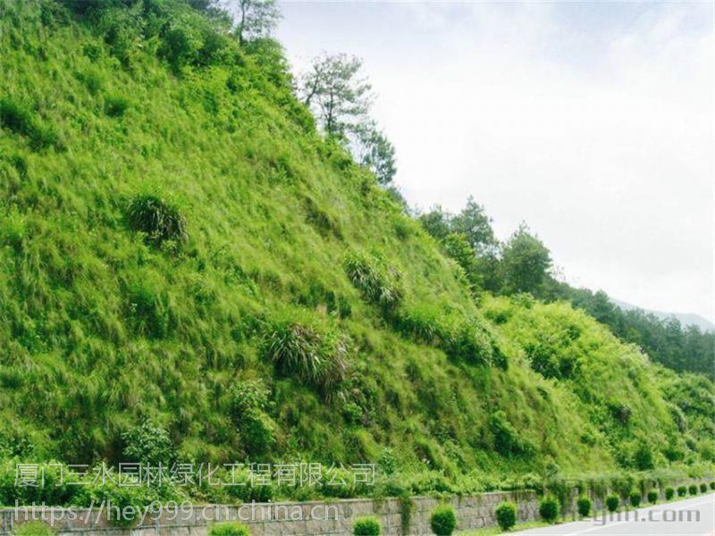 云南草种专卖店常年面向玉溪地区出售边坡专用品种