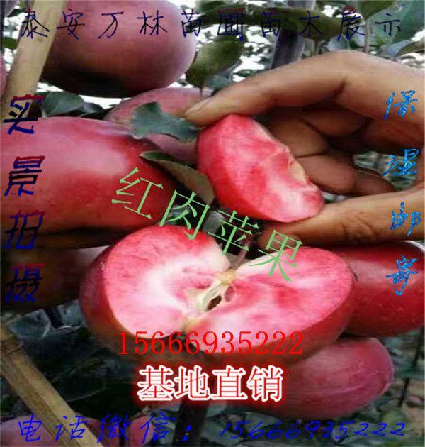 http://himg.china.cn/0/4_548_236558_600_630.jpg