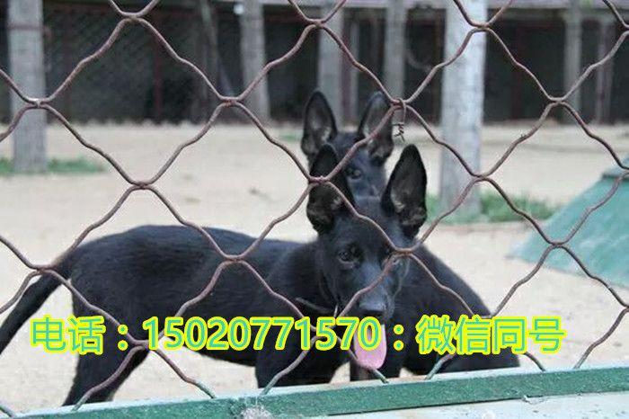 http://himg.china.cn/0/4_549_241520_700_466.jpg