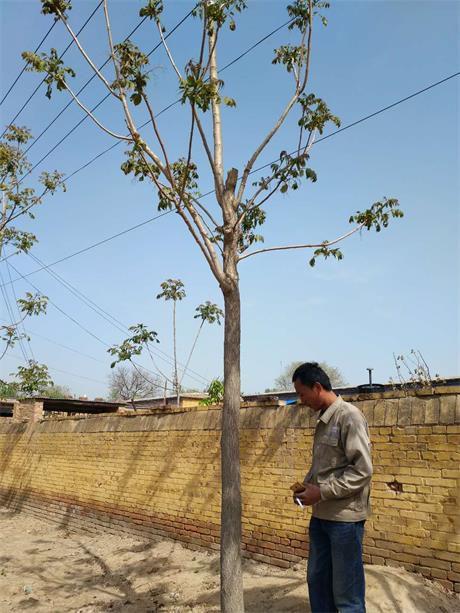 http://himg.china.cn/0/4_565_1041083_460_613.jpg