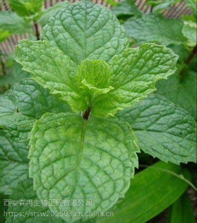 森冉生物留兰香提取物/绿薄荷提取物/香花菜提取物