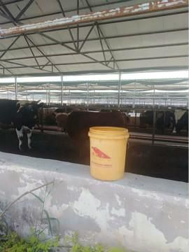 牛羊催肥剂牛羊预混料厂家排名