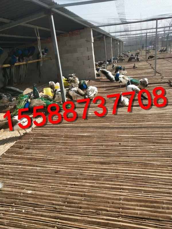 http://himg.china.cn/0/4_585_239144_600_800.jpg