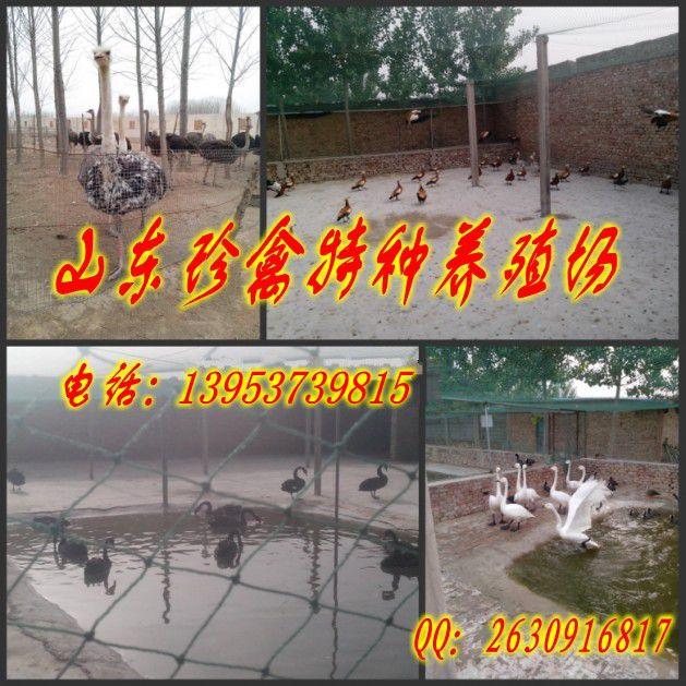 http://himg.china.cn/0/4_586_241020_629_629.jpg