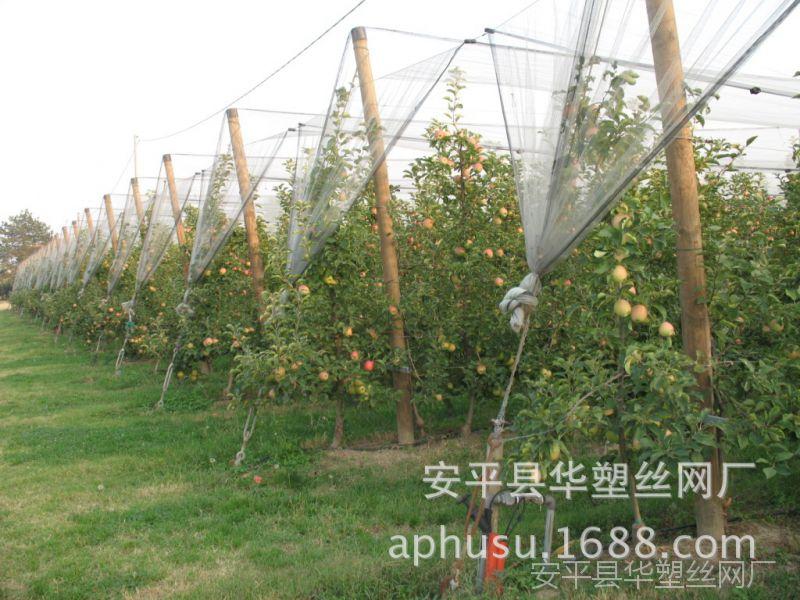 【现货供应】葡萄防雹网、果树防雹网、塑料防雹网、蔬菜防雹网