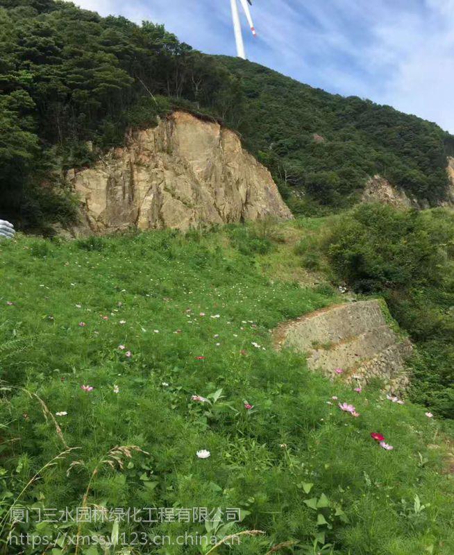 重庆矿山荒山生态修复绿化易成活好生长的草种灌木乔木种子有哪几个品种
