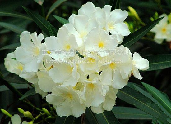 重庆美信装饰公司建议家里有孕妇 咀好别摆放这九种花
