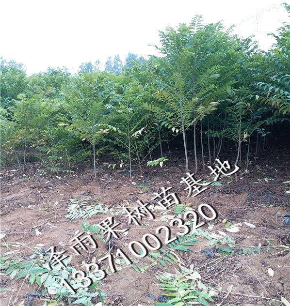 http://himg.china.cn/0/4_5_235740_598_632.jpg