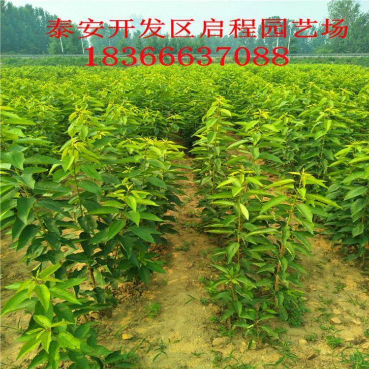 http://himg.china.cn/0/4_600_236942_750_750.jpg