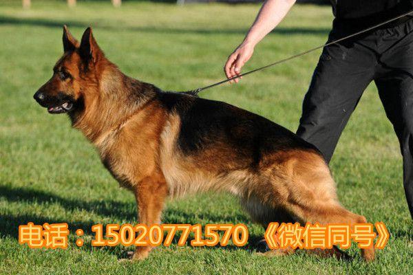 http://himg.china.cn/0/4_600_242634_600_400.jpg