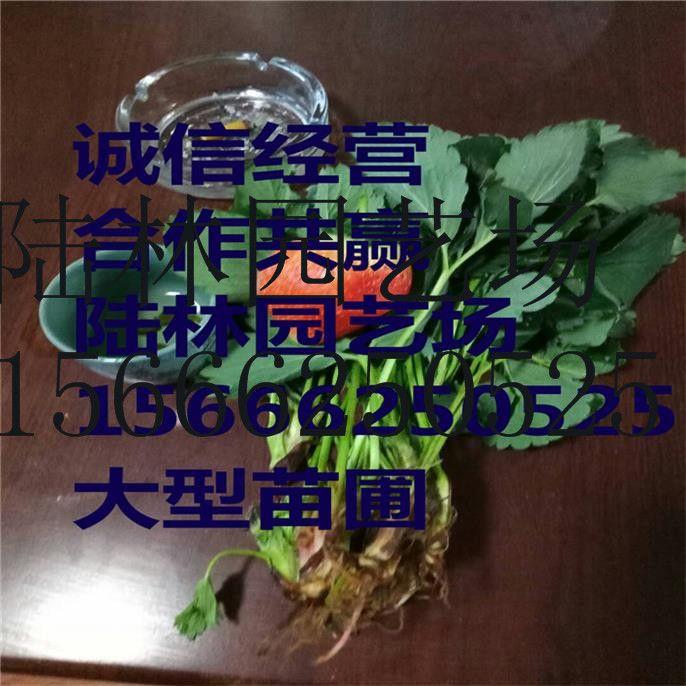 http://himg.china.cn/0/4_601_239504_686_686.jpg