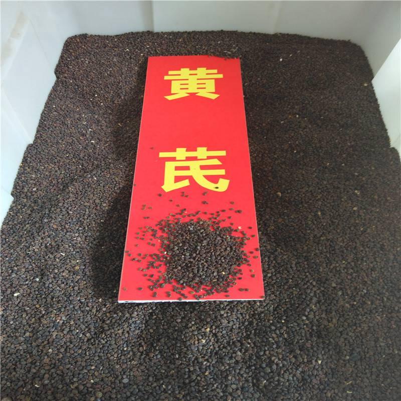 中药当归种子一亩地种植多少公斤