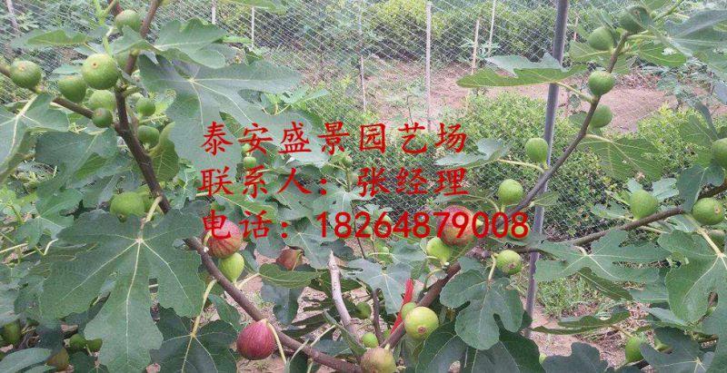 http://himg.china.cn/0/4_606_1036043_800_411.jpg