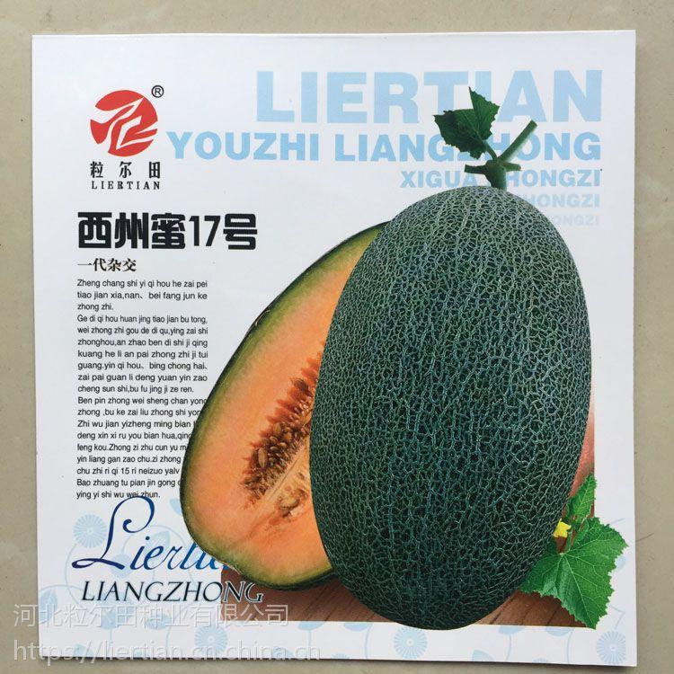 浅麻绿、网纹、厚皮哈密瓜种子 粒尔田西州蜜17号种子