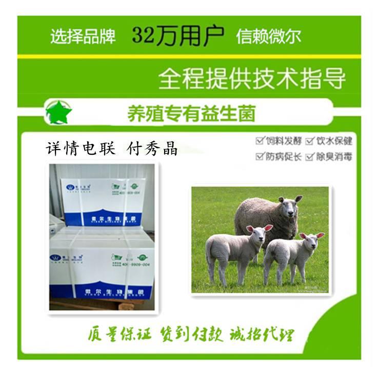 肉羊益生菌饲料添加剂调节羊肠道产品
